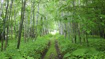 Nopporo Forest Park