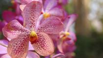 Mae Sa Orchid Farm