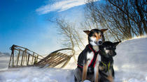 Winter Adventures in Tromso