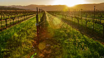 Wine Country Bike Tours