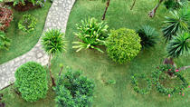 Palm Groves Garden (Gibbons Garden)