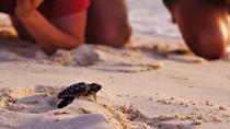 İztuzu Beach (Turtle Beach)