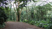 Rain Forest Tours in Oahu