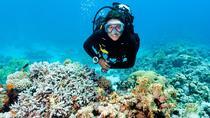Scuba Diving in Oahu
