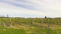 Wine Tasting Tours in Uruguay