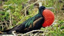 Frigate Bird Sanctuary