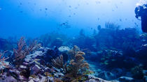 Top Diving Spots Near Grand Case