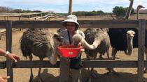 Curacao Ostrich Farm