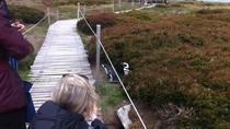 Otway Sound & Penguin Reserve