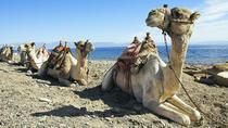 Camel Rides in Sharm el Sheikh