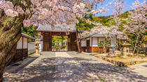 How to Experience Cherry Blossom Season in Kyoto