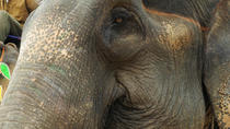 Dera Amer Elephant Safari