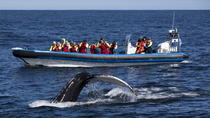 Whale Watching Tours in Reykjavik