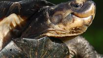 Satang Turtle Island National Park