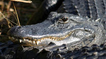 Everglades Tours from Orlando