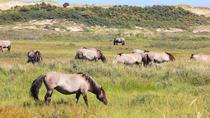 South Kennemerland National Park (Nationaal Park Zuid-Kennemerland)