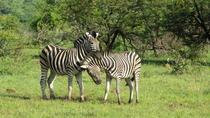 Wildlife Tours from Johannesburg