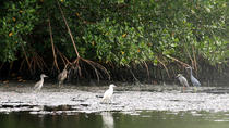 Caroni Bird Sanctuary