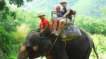Ride an Elephant in Phuket