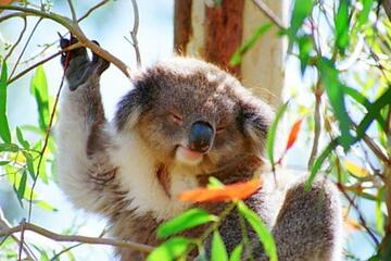 Image result for Melbourne Zoo