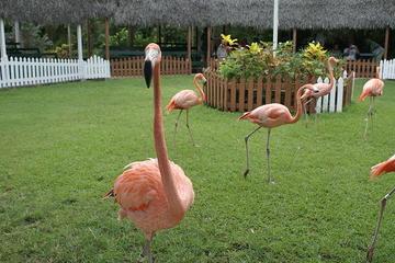 Centro de Conservação, Zoológico e Jardins de Ardastra