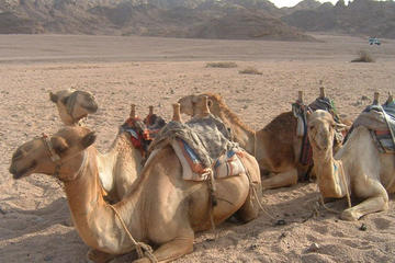 Egyptian Desert Tours from Sharm el Sheikh