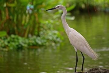 Kota Kinabalu Bird Sanctuary Park