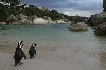 Seeing Penguins at Boulders Beach