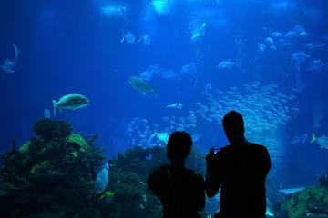 The Best Downtown Aquarium Tours Trips Tickets