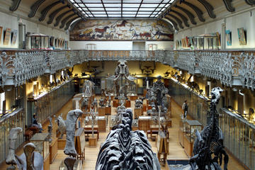 Museum of Natural History (Musee d'Histoire Naturelle)