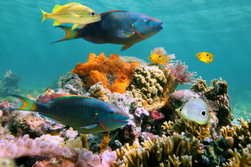 Bay Island Underwater Museum