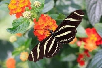 Roatan Butterfly Garden