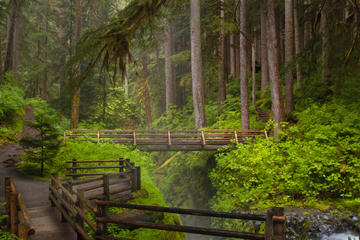 Image result for olympic national park