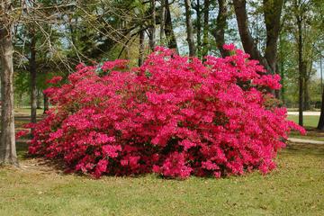 Waipahihi Botanical Gardens