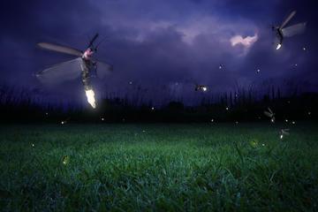 Kuala Selangor Fireflies