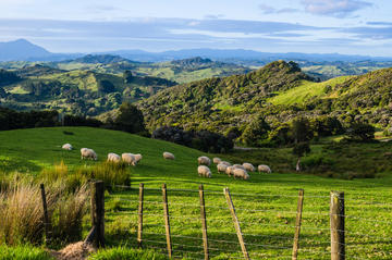 North Island Tours from Auckland