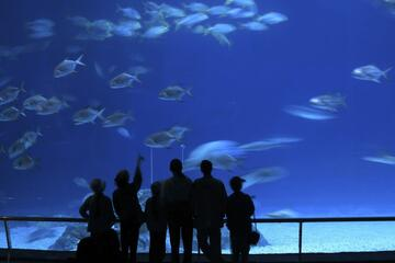 AQWA - Aquarium of Western Australia