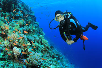 Diving in Sharm el Sheikh