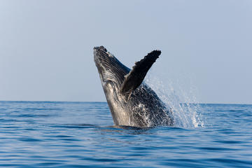Whale Watching Tours in Maui