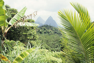 St Lucia Rainforest, Aruba