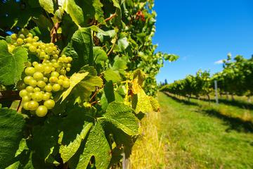 Wine Tasting Near Christchurch