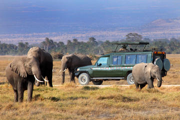How to Choose a Safari in Kenya