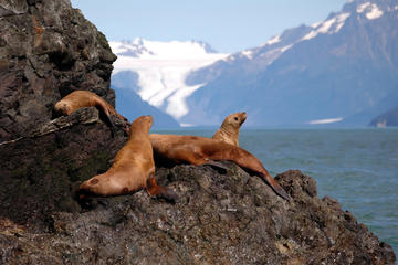 Alaska Maritime National Wildlife Refuge, Seward