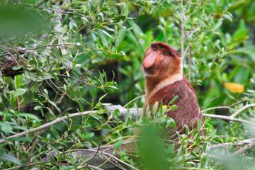 Wildlife Near Kuching