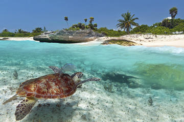 Sea Life Encounters in Grand Cayman