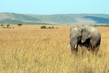 Best Zimbabwe Safaris
