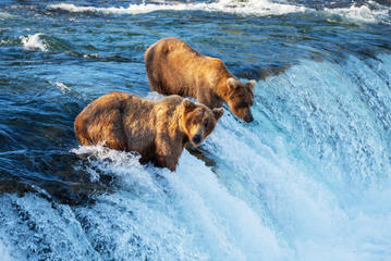 Shore Excursions in Alaska