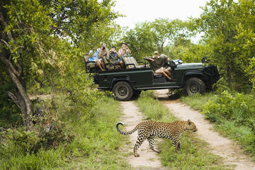 Going on a Big Five Game Drive in Kruger National Park