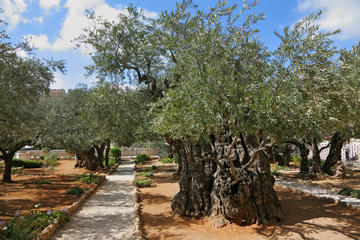 The 10 Best Garden of Gethsemane Tours Trips Tickets