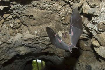 Actún Kan Caves